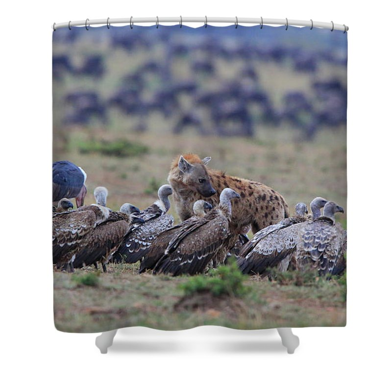 Vultures Shower Curtain featuring the photograph Among The Vultures 1 by Leigh Lofgren