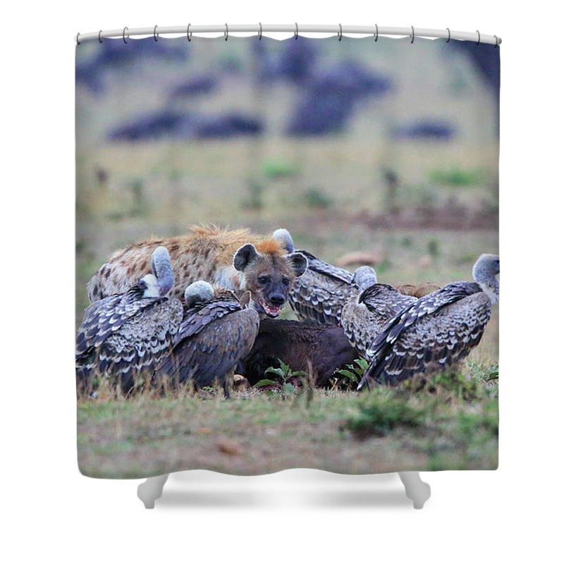 Africa Shower Curtain featuring the photograph Among The Vultures 2 by Leigh Lofgren