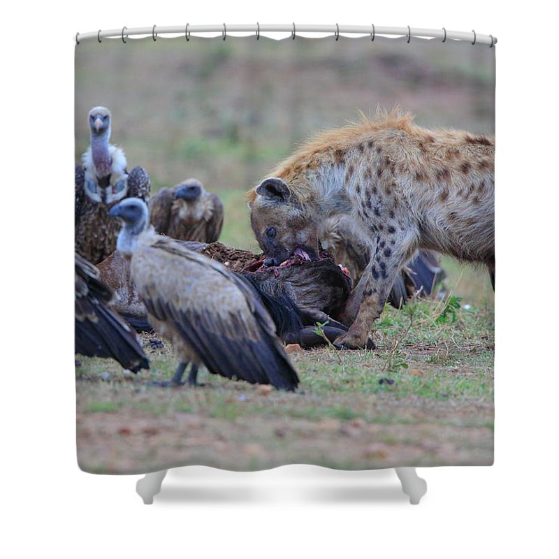 Animals Shower Curtain featuring the photograph Among The Vultures 3 by Leigh Lofgren