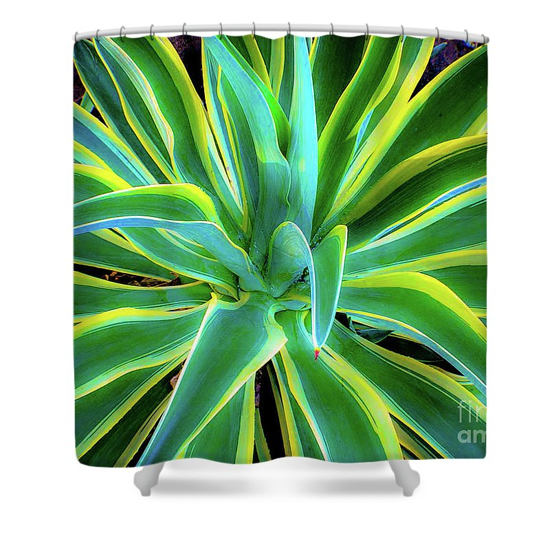 Agave Shower Curtain featuring the photograph An Agave In Color by D Davila
