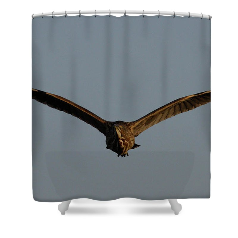 Flies In Shower Curtain featuring the photograph An American Bittern Comes Flying In. by Mark Wallner