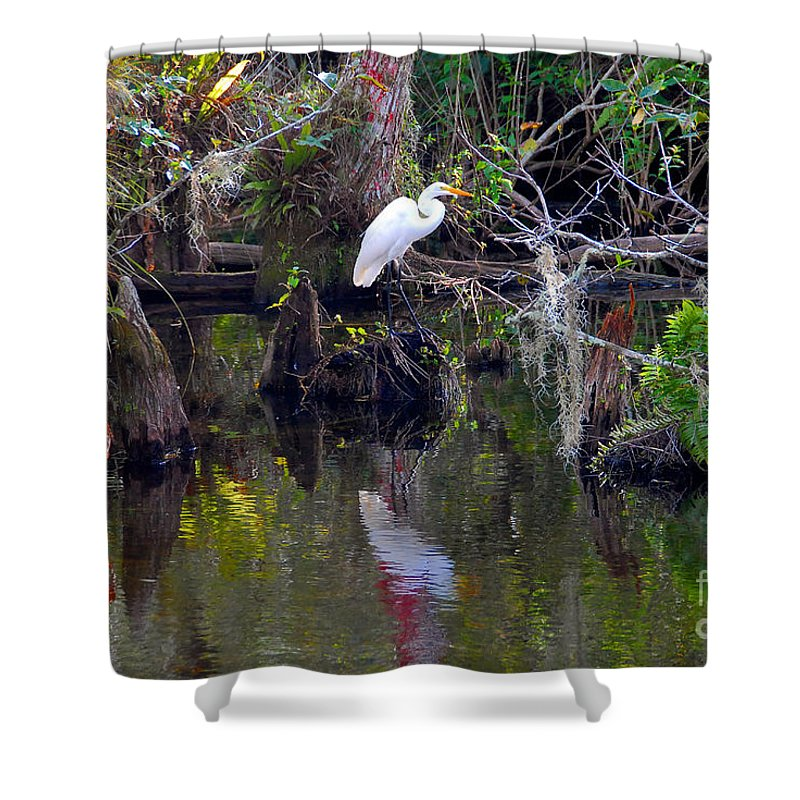 Everglades National Park Florida Shower Curtain featuring the photograph An Egrets World by David Lee Thompson