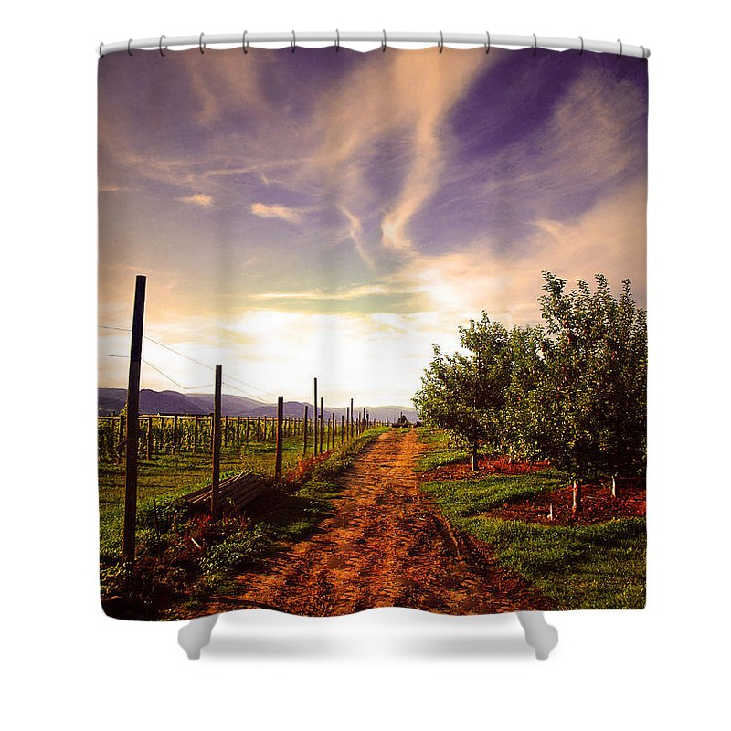 Road Shower Curtain featuring the photograph An Evening By The Orchard by Tara Turner
