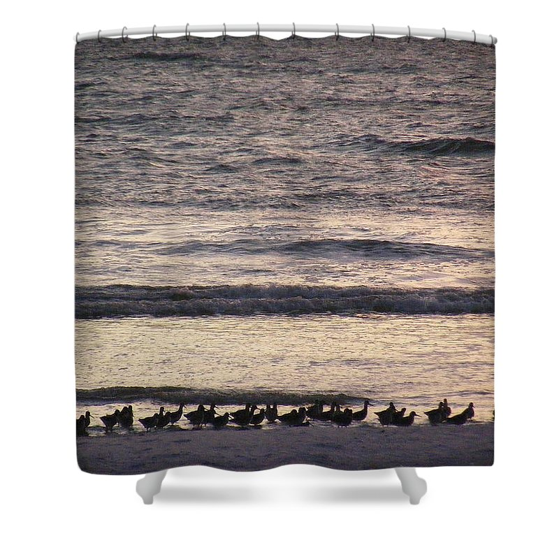 Evening Stroll Shower Curtain featuring the photograph An Evening Stroll by Ed Smith