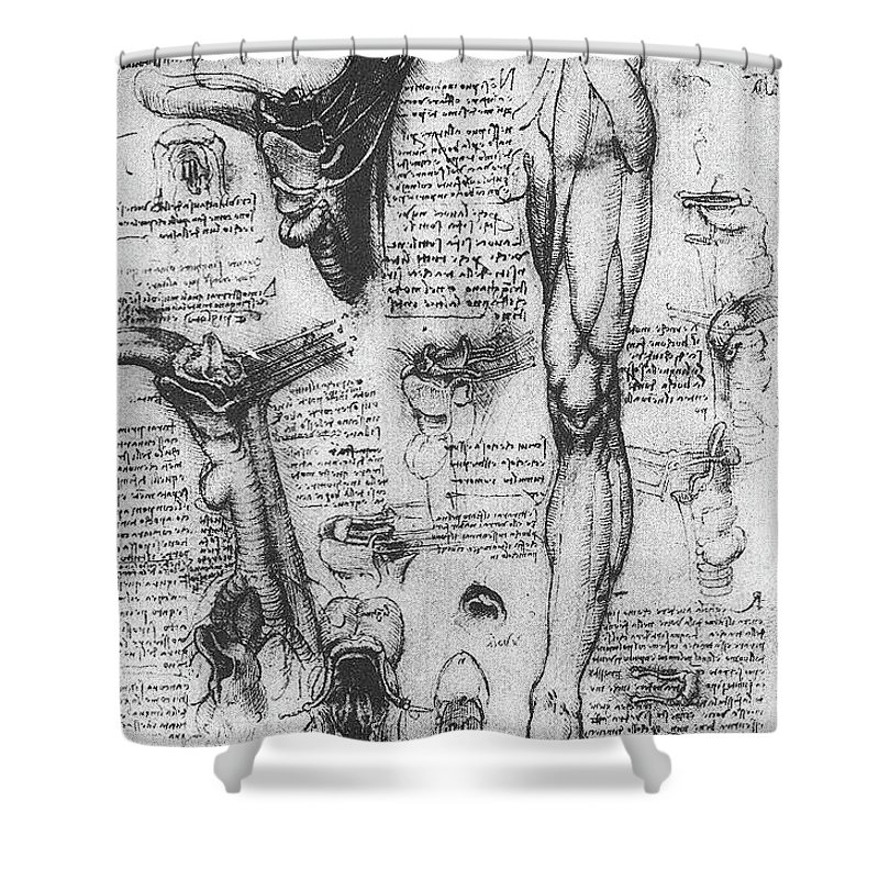 Anatomical Studies, Larynx And Leg Shower Curtain for Sale by ...