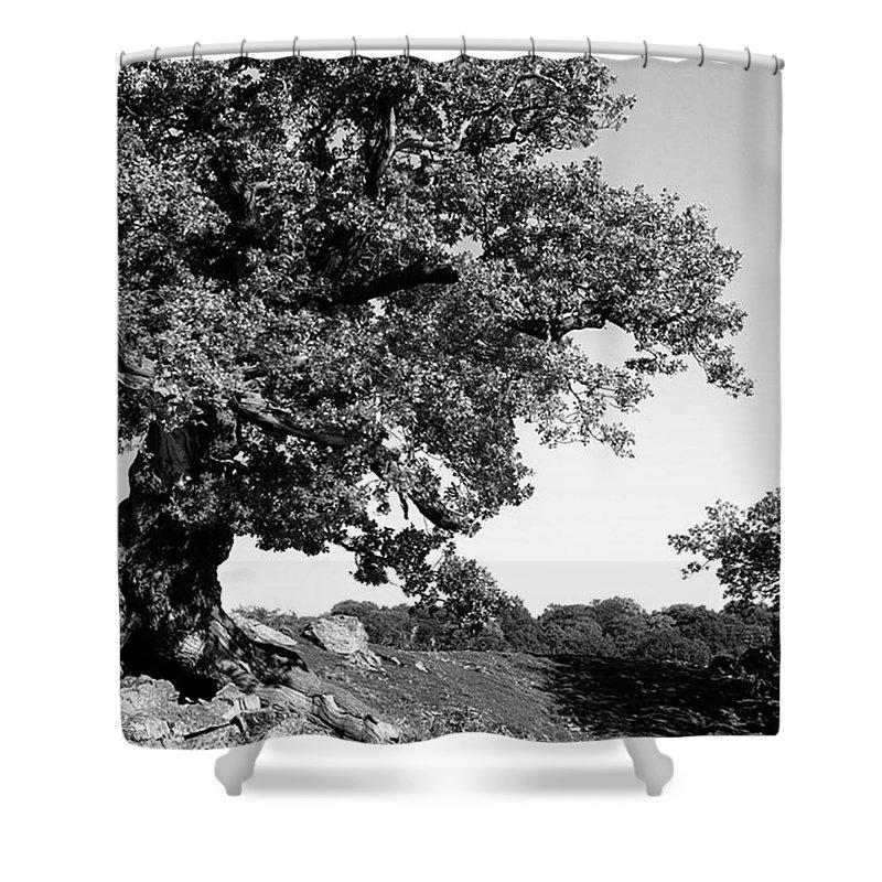 Woodland Shower Curtain featuring the photograph Ancient Oak, Bradgate Park by John Edwards