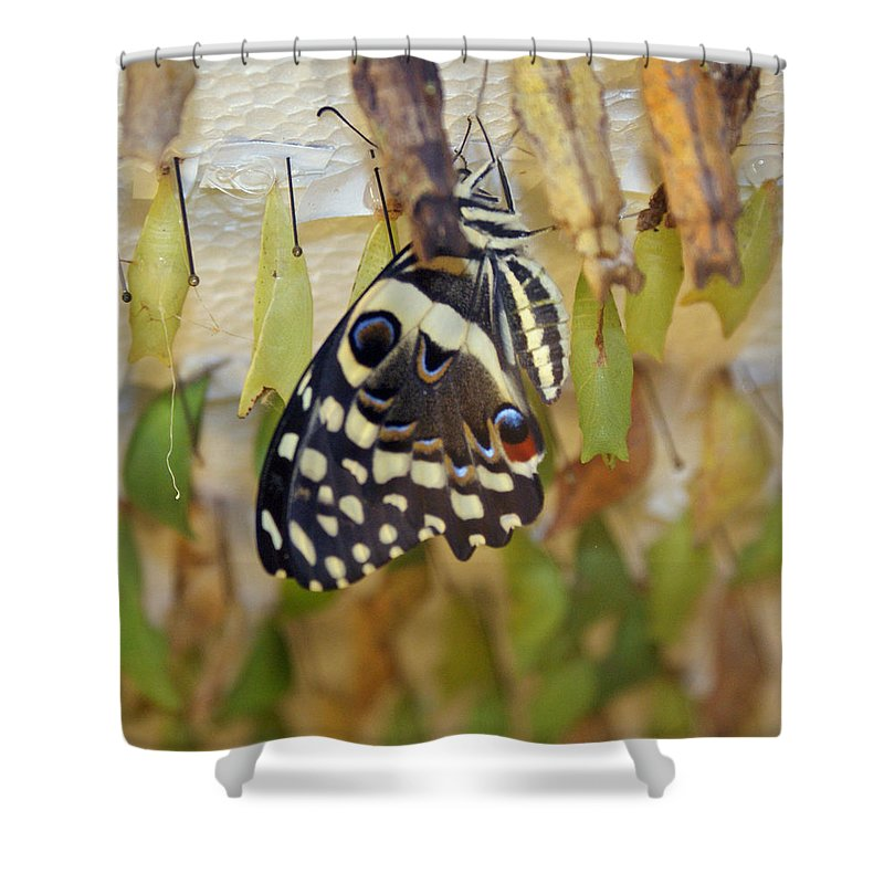 Butterfly Shower Curtain featuring the photograph And Life Begins by Shelley Jones