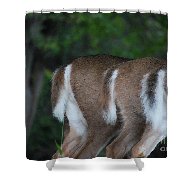 Deer Shower Curtain featuring the photograph And The Butts Have It by Lori Tambakis