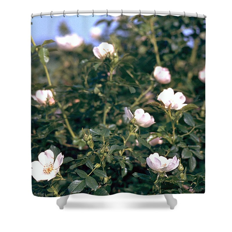 Anemone Shower Curtain featuring the photograph Anemone by Flavia Westerwelle
