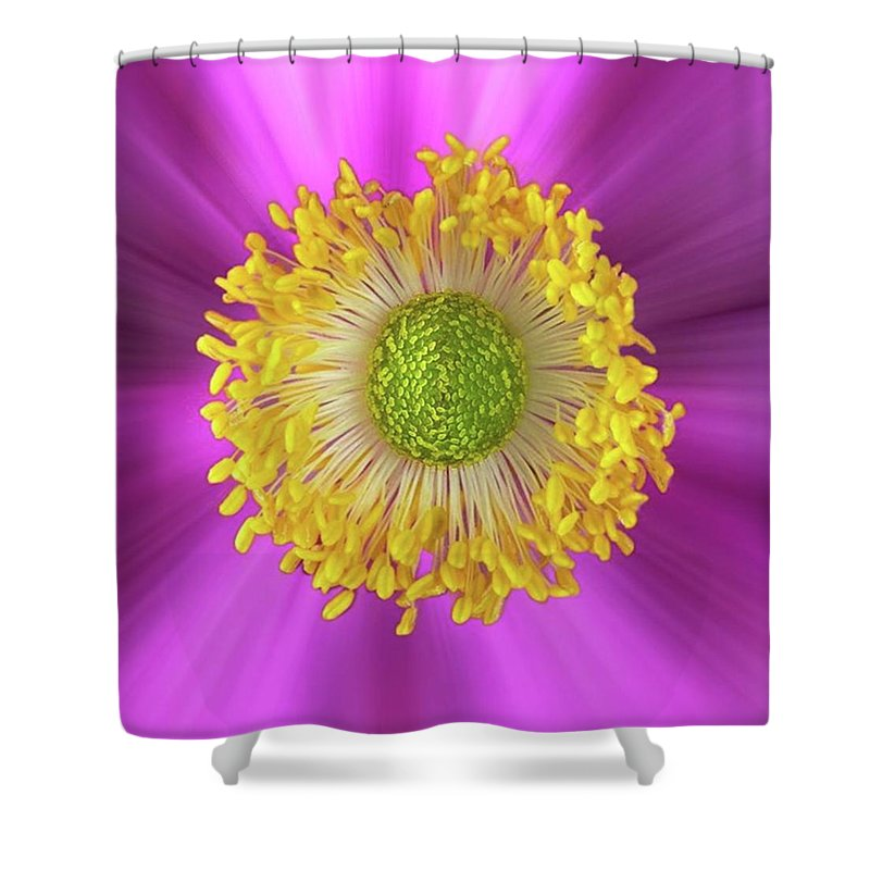 Summer Shower Curtains
