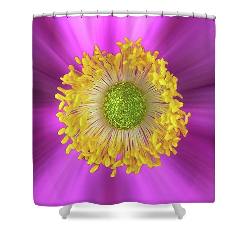 Beautiful Shower Curtain featuring the photograph Anemone Hupehensis 'hadspen by John Edwards