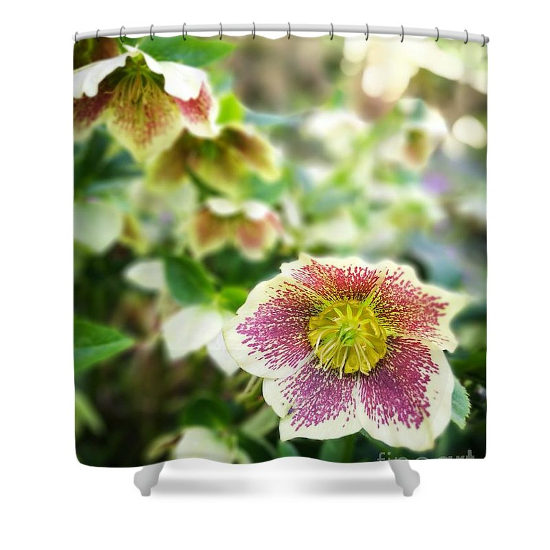 Nature Shower Curtain featuring the photograph Anemone by Jarek Filipowicz