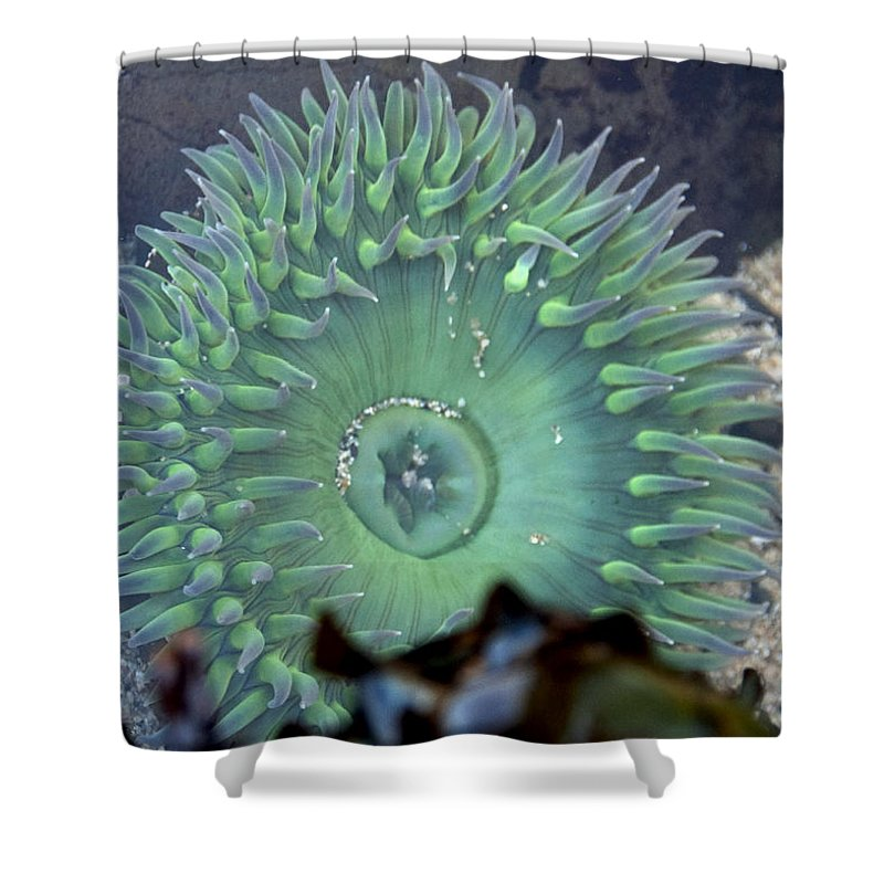 Anemone Shower Curtain featuring the photograph Anemone by Steven Natanson