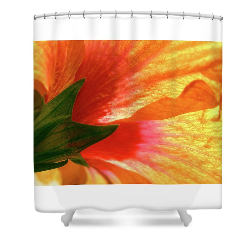 Hibiscus Shower Curtain featuring the photograph Angel Brushstrokes by Marie Hicks