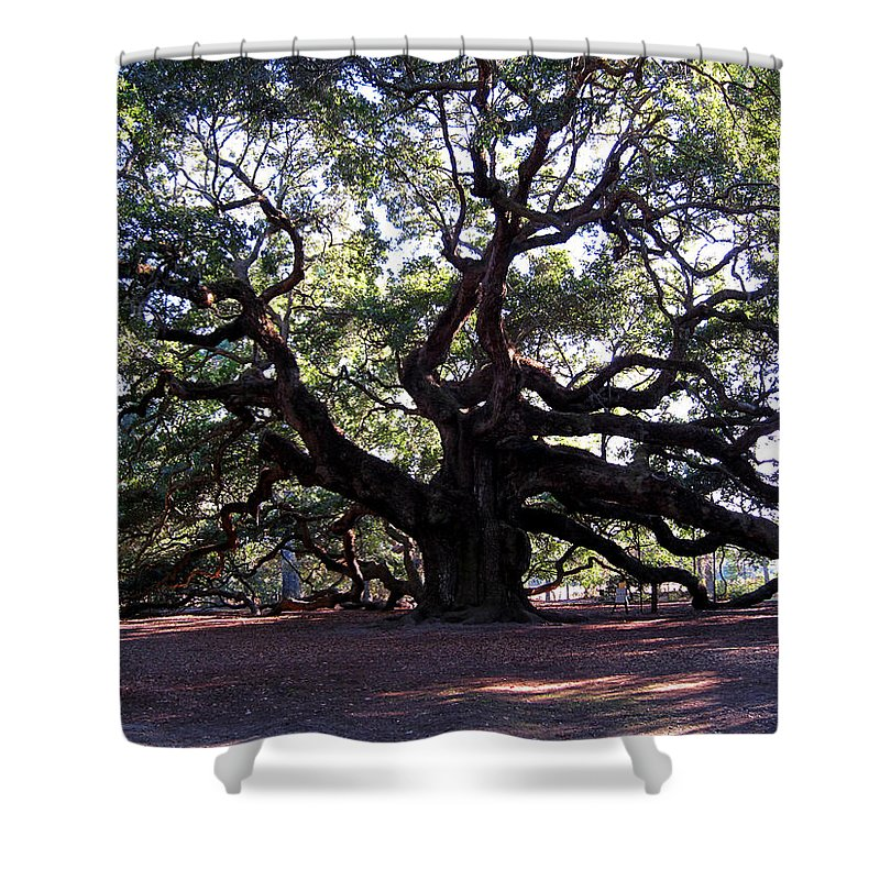 Photography Shower Curtain featuring the photograph Angel Oak II by Susanne Van Hulst
