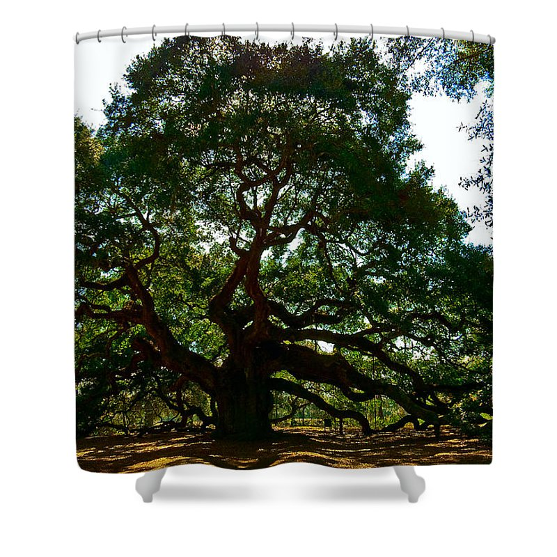 Tree Shower Curtain featuring the photograph Angel Oak Tree 2004 by Louis Dallara