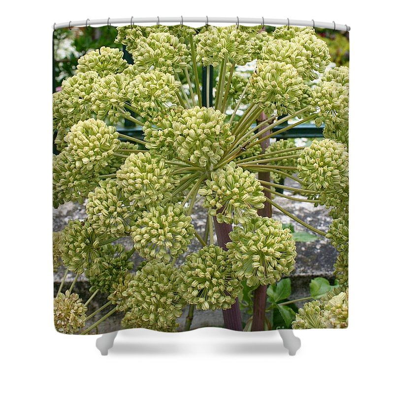 Angelica Shower Curtain featuring the photograph Angelica by Christiane Schulze Art And Photography