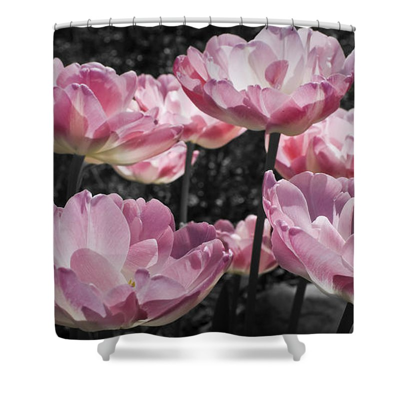 Pink Shower Curtain featuring the photograph Angelique Peony Tulips by Teresa Mucha