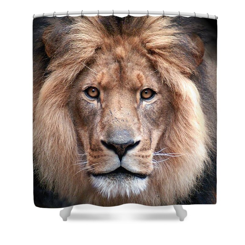 Lion Shower Curtain featuring the photograph Angry by Bill Stephens