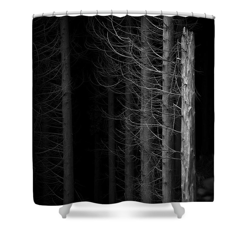 Tree Shower Curtain featuring the photograph Angst by Dorit Fuhg