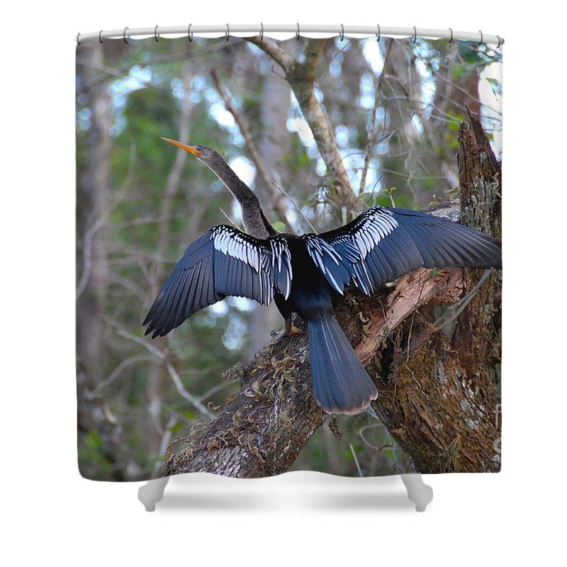 Anhinga Shower Curtain featuring the photograph Anhinga by David Lee Thompson