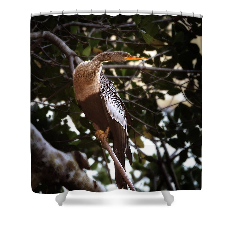 Anhinga Shower Curtain featuring the photograph Anhinga Water Fowl by Joseph G Holland