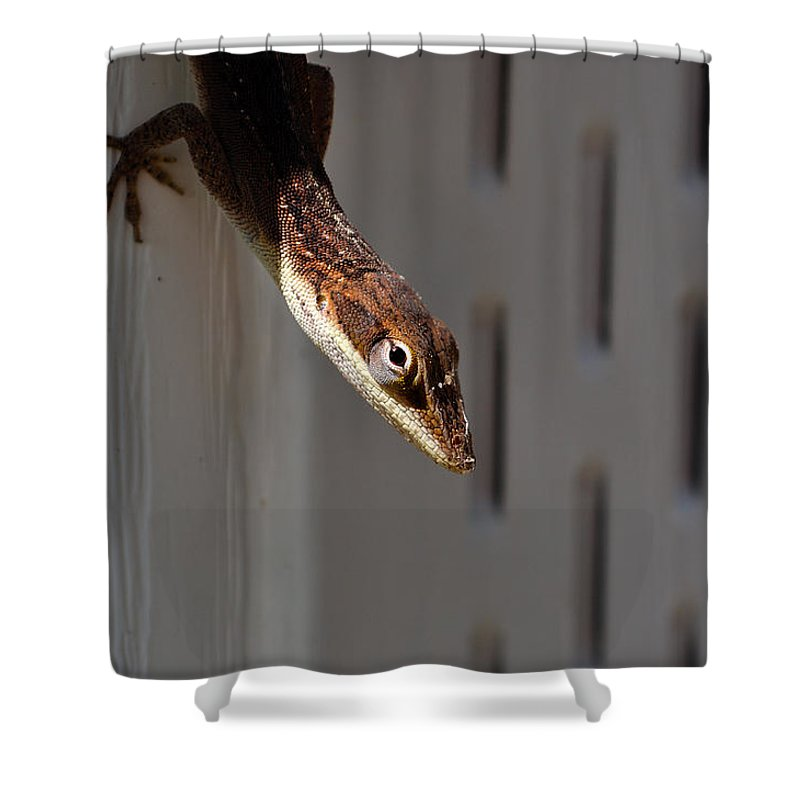 Animal Shower Curtain featuring the photograph Anole by Kenneth Albin