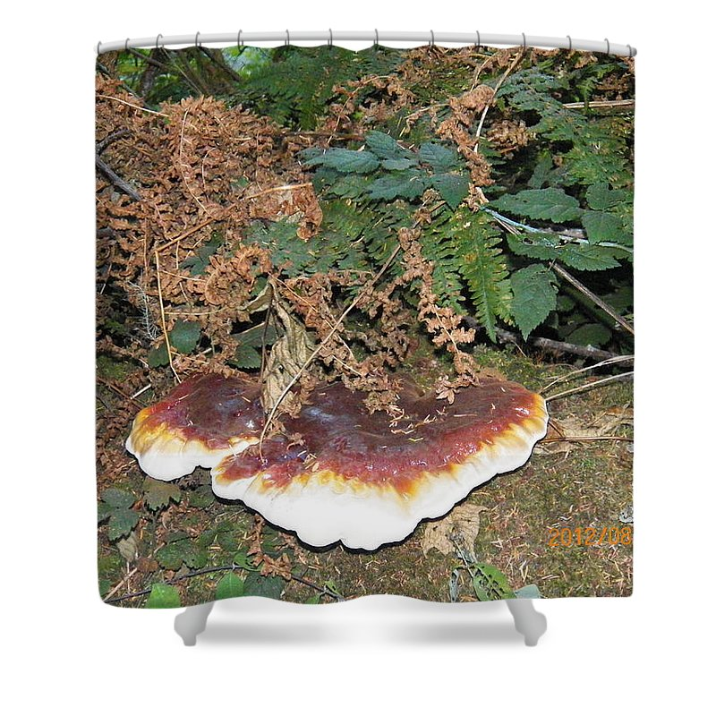 Canvas Photography Prints Shower Curtain featuring the photograph Another Toadstool by Laurie Kidd