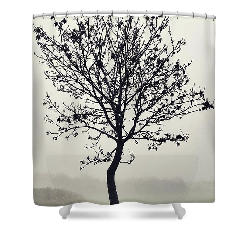 Tree Shower Curtain featuring the photograph Another Walk Through The by John Edwards