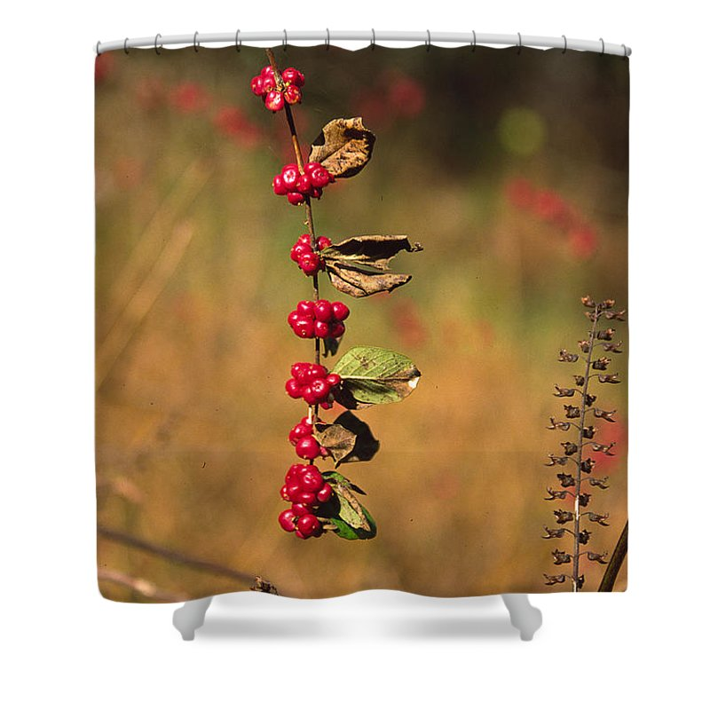 Fall Colors Shower Curtain featuring the photograph Another Year by Randy Oberg