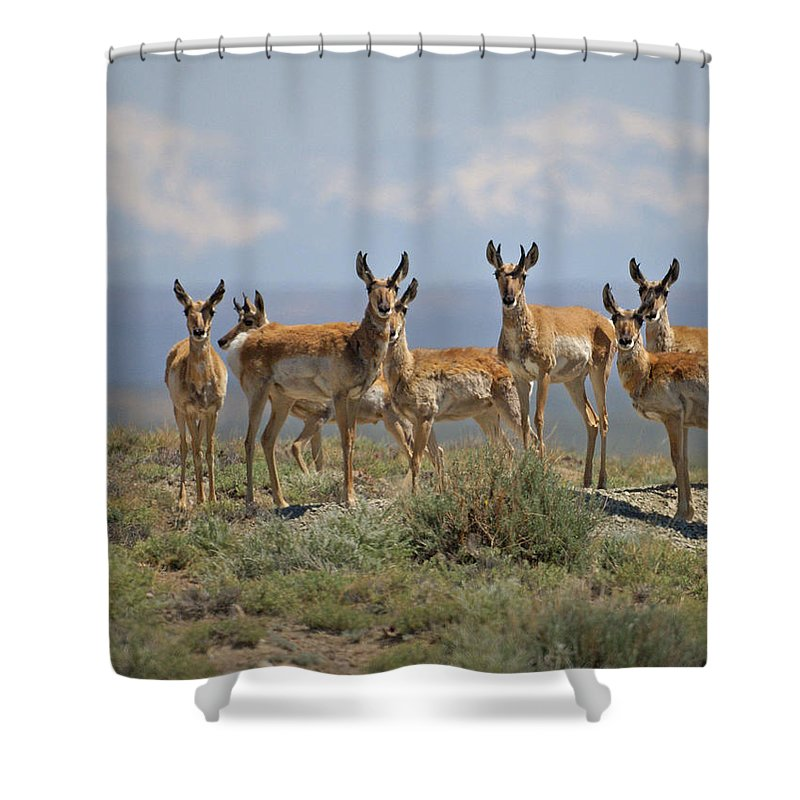 Antelope Shower Curtain featuring the photograph Antelope by Heather Coen
