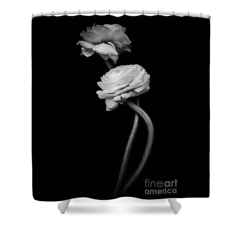 Ranunculus Shower Curtain featuring the photograph Antique Flowers -1 by Wei-San Ooi