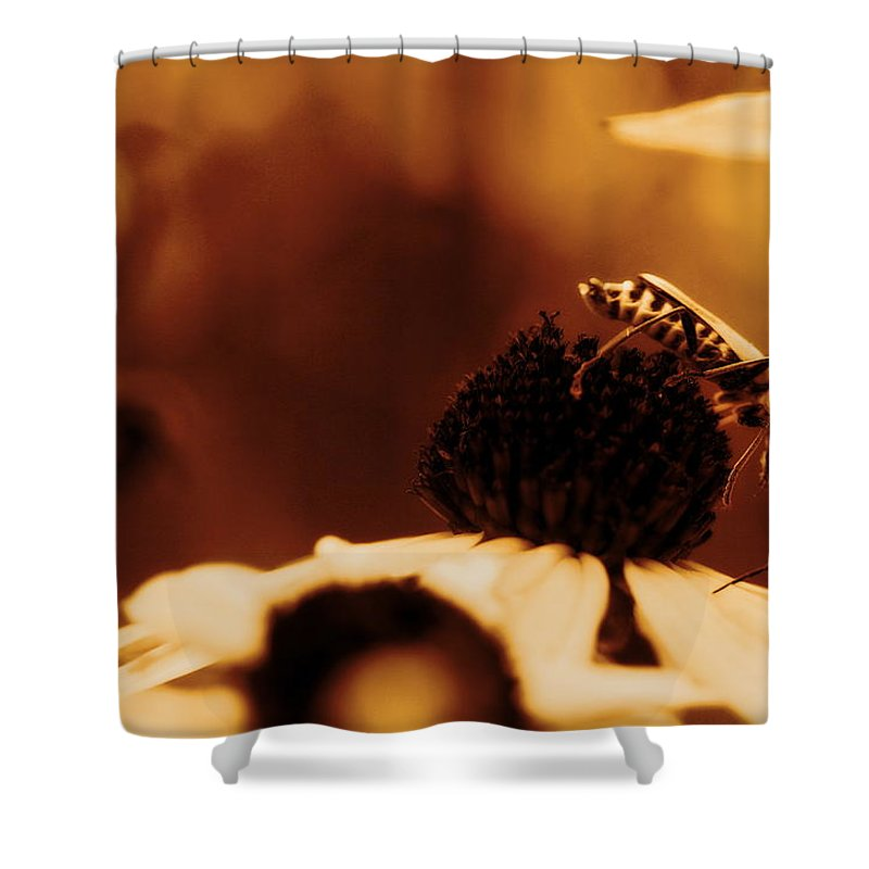 Leatherwing Shower Curtain featuring the photograph Anyone Else Down There - Gold Glow by Angela Rath