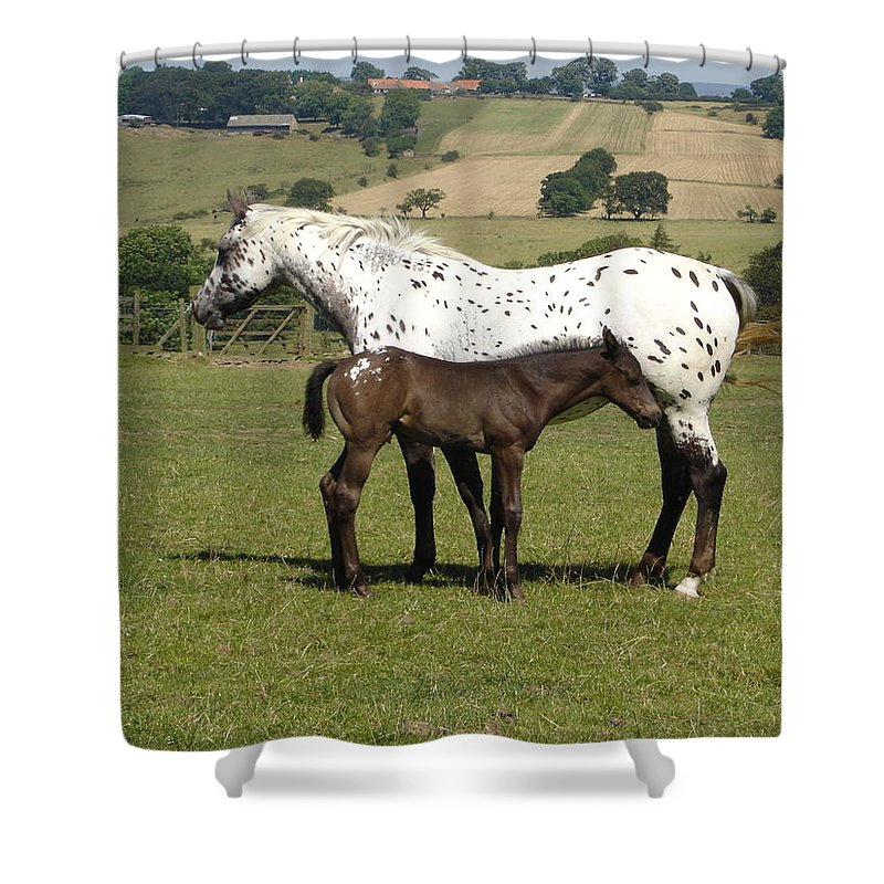 Horse Shower Curtain featuring the photograph Appaloosa mare and foal by Susan Baker