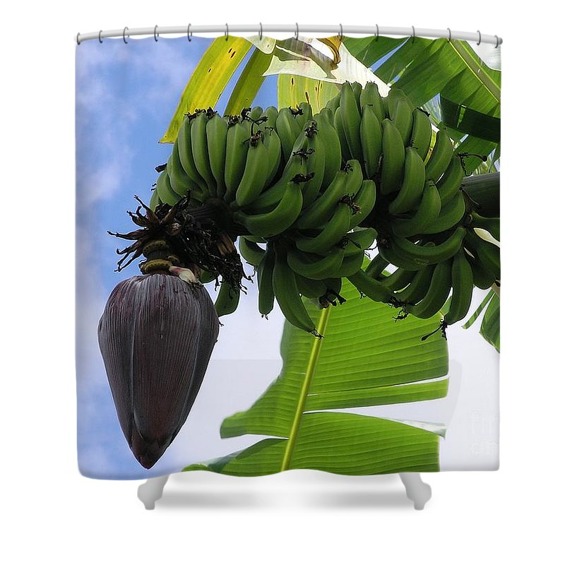 Green Shower Curtain featuring the photograph Apple Bananas by Mary Deal