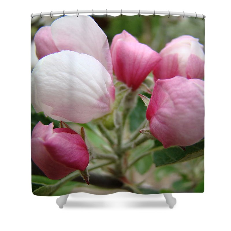 Apple Shower Curtain featuring the photograph Apple Blossom Buds Art Prints Spring Blossoms Baslee Troutman by Baslee Troutman
