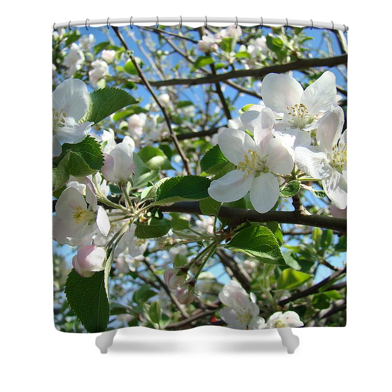 �blossoms Artwork� Shower Curtain featuring the photograph Apple Blossoms Art Prints 60 Spring Apple Tree Blossoms Blue Sky Landscape by Baslee Troutman