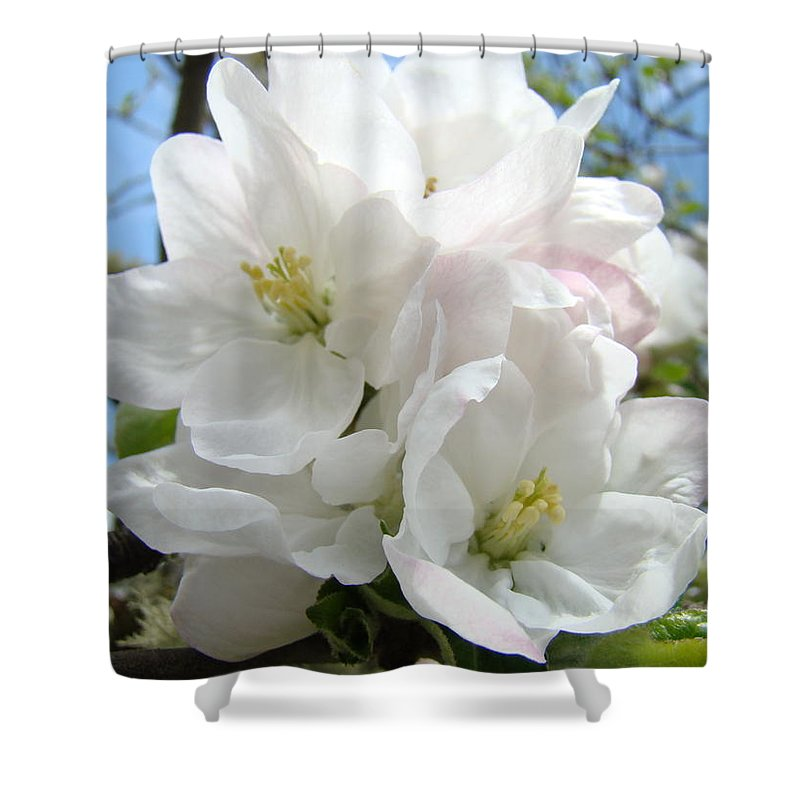 �blossoms Artwork� Shower Curtain featuring the photograph Apple Blossoms Art Prints Giclee 48 Spring Apple Tree Blossoms Blue Sky Macro Flowers by Baslee Troutman