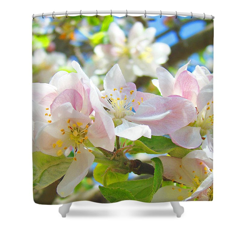 Apple Shower Curtain featuring the photograph Apple Blossoms Art Prints Spring Trees Baslee Troutman by Baslee Troutman