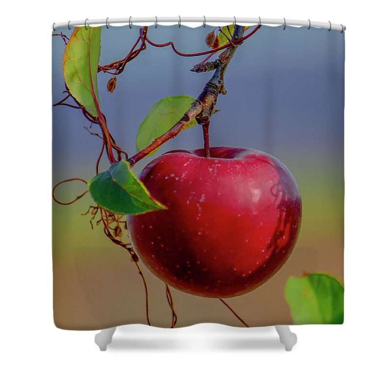 Apple Shower Curtain featuring the photograph Apple On A Tree by Janet Argenta