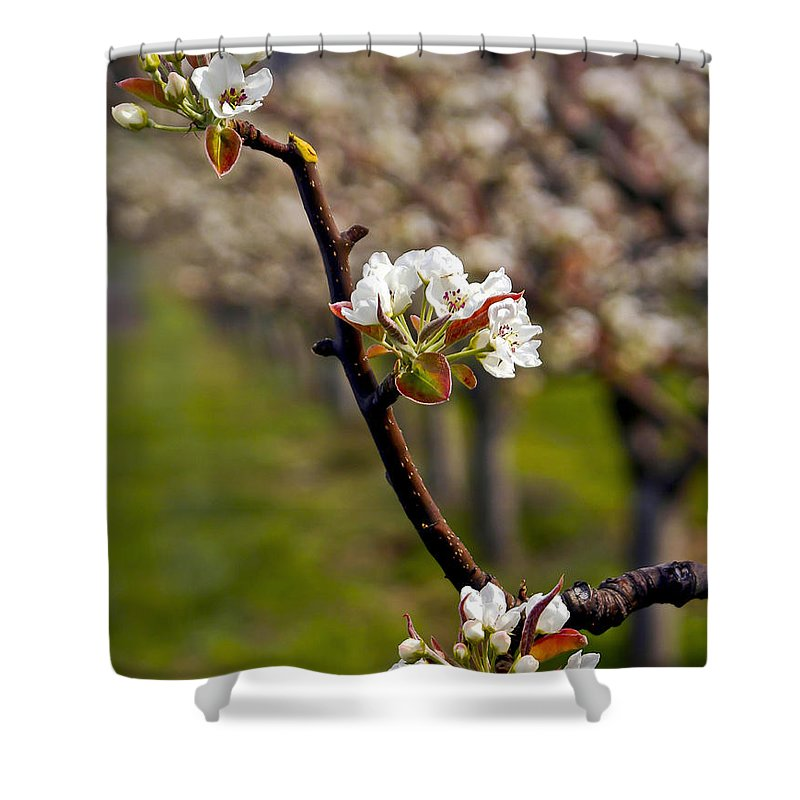 Orchard Shower Curtain featuring the photograph Apple Promise by Albert Seger