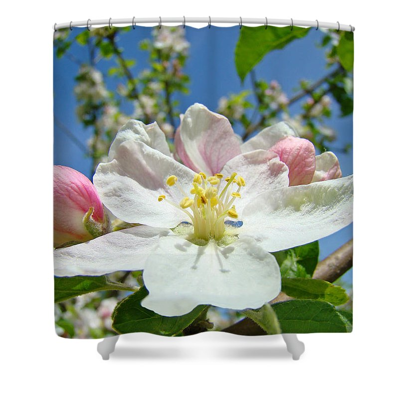 Blossom Shower Curtain featuring the photograph Apple Tree Blossom Art Prints Springtime Nature Baslee Troutman by Baslee Troutman