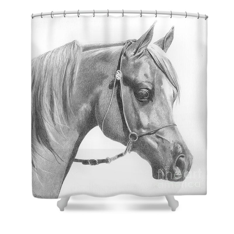 Horse Shower Curtain featuring the drawing Arabian 2 by Karen Townsend