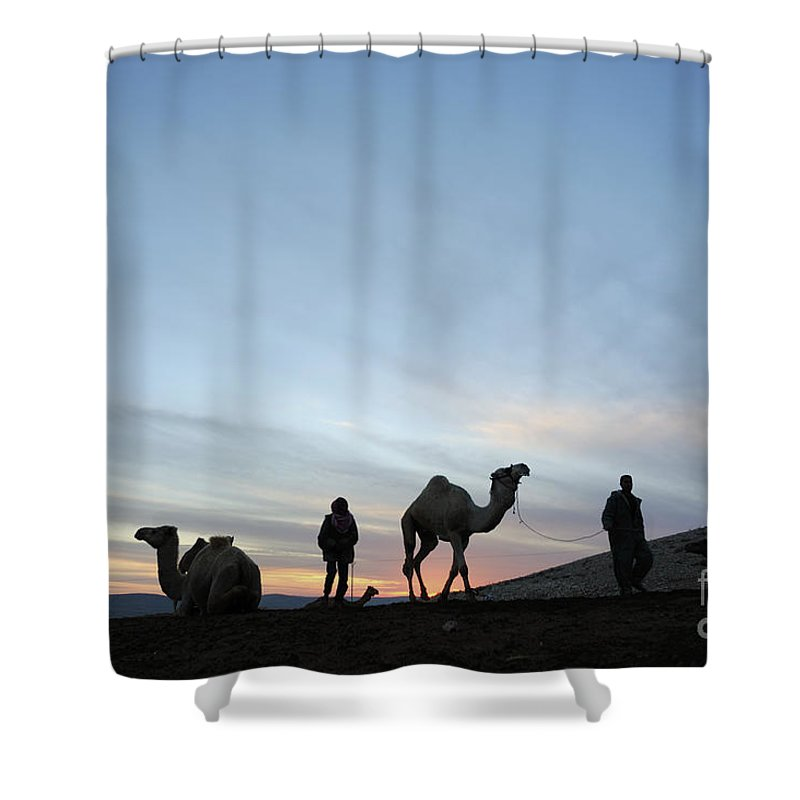Middle East Shower Curtain featuring the photograph Arabian Camel At Sunset by PhotoStock-Israel
