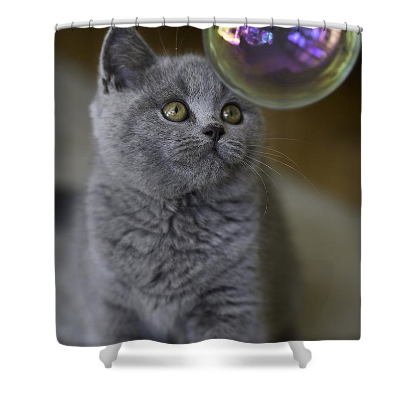 Cat Shower Curtain featuring the photograph Archie With Bubble by Sheila Smart Fine Art Photography