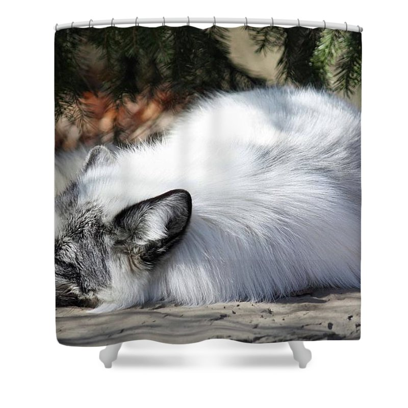 Maryland Shower Curtain featuring the photograph Arctic Fox by Ronald Reid