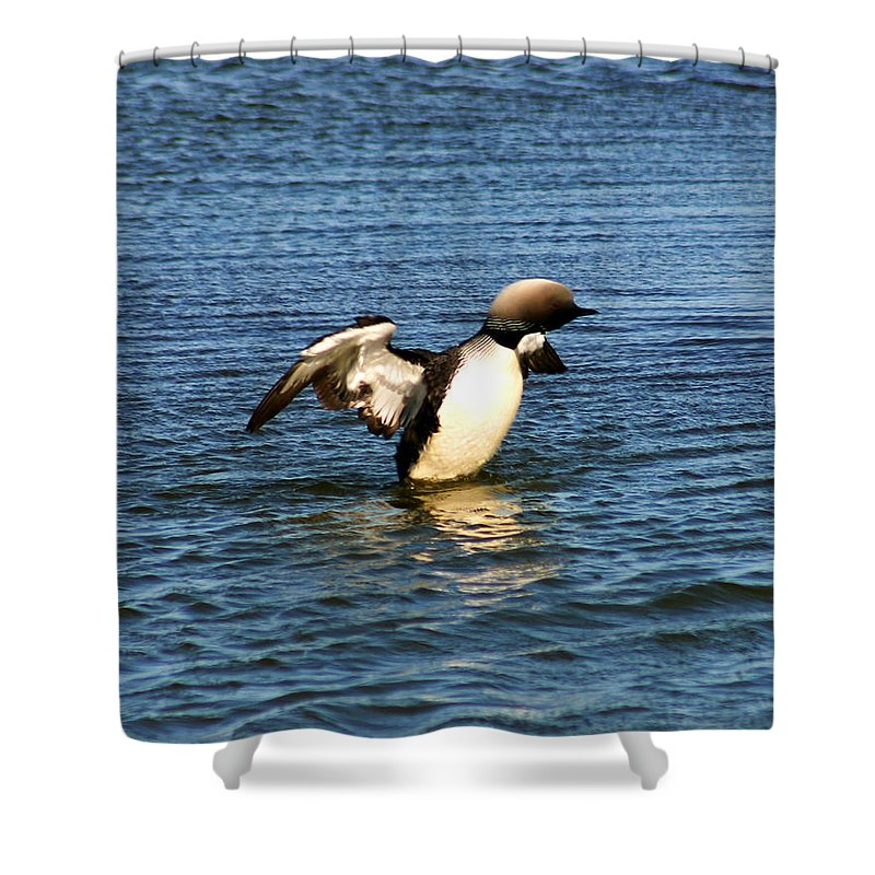 Loon Shower Curtain featuring the photograph Arctic Loon by Anthony Jones