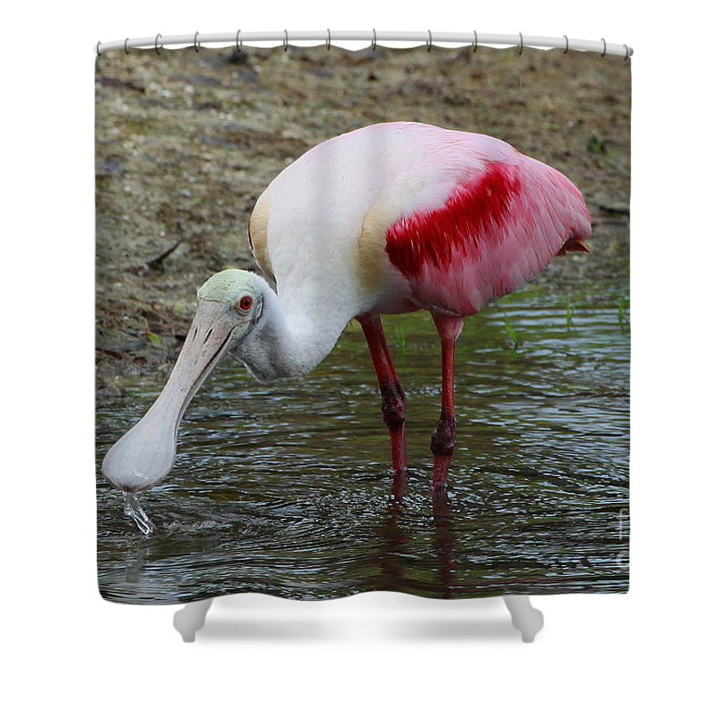 Roseate Spoonbill Shower Curtain featuring the photograph Are U Looking At Me by Barbara Bowen