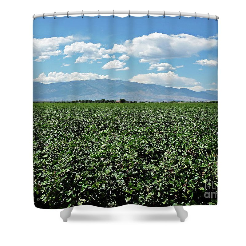 Arizona Cotton Field Shower Curtain featuring the photograph Arizona Cotton Field by Methune Hively