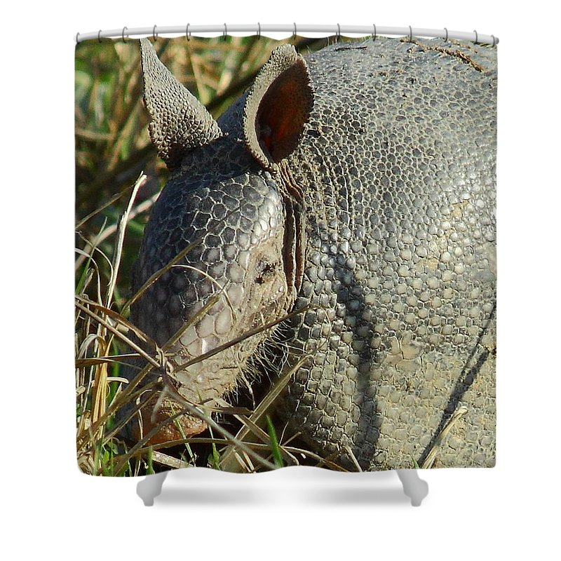 Animal Shower Curtain featuring the photograph Armadillo By Morning by Robert Frederick